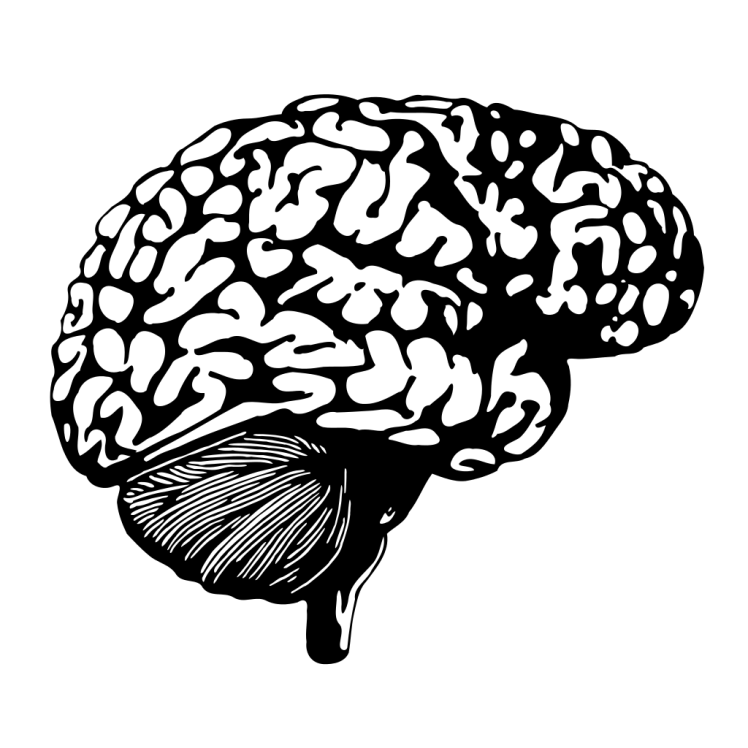 The human brain may hold the answer to many mysteries, like why stock market bubbles occur over and over again throughout history. (Credit: Pendethan)