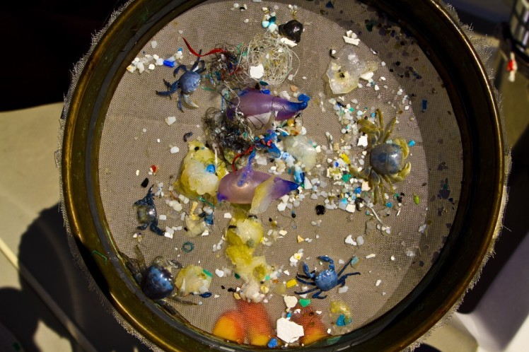 Most of the plastic in the world's oceans are small fragments like these, fished from the water of the South Atlantic. (Credit: Jody Lemmon)